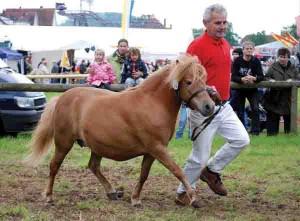 ponny2