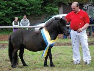 ponny3