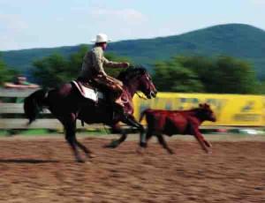 ranchworkingcowhorse